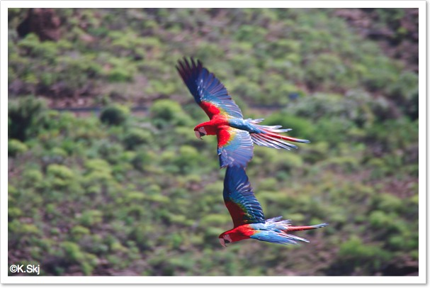parrots-palmitos